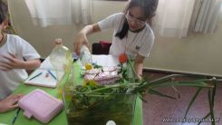 2do grado con Plantas Acuaticas 26