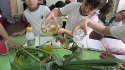 2do grado con Plantas Acuaticas 31