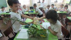 2do grado con Plantas Acuaticas 9