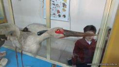 Visita al Museo de Ciencias Naturales 12