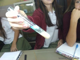 Extracción de ADN 15