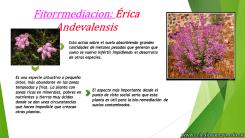 Biorremediación 2