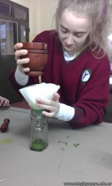 Extracción de pigmentos de plantas verdes 5