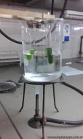 Extracción de pigmentos de plantas verdes 8