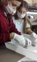 Disección de ojo vacuno 1