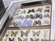 Insectos plaga 26