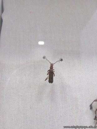 Insectos plaga 28