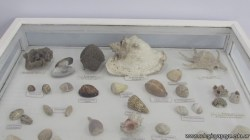 Visita al museo 17