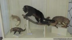 Visita al museo 23