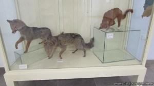 Visita al museo 27
