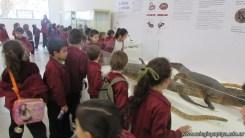 Visita al museo 42