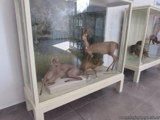 Visita al museo de Ciencias Naturales 41