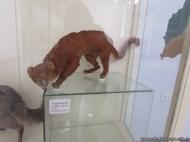Visita al museo de Ciencias Naturales 46