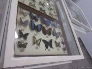 Visita al museo de Ciencias Naturales 60