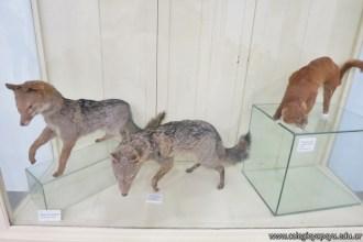 Visita al museo de Cs. Naturales 51