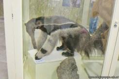 Visita al museo de Cs. Naturales 53