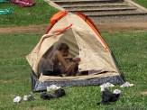 Campamento de 1er grado 84