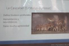 Clase abierta adaptaciones de animales y plantas 32