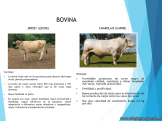 Cría de animales en Argentina 8