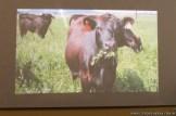 Cría de animales mediante feed lot 16