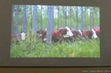 Cría de animales mediante feed lot 17