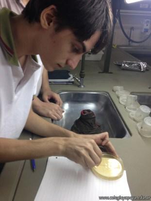Cultivo de microorganismos 5