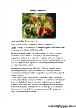 Plantas carnívoras 1