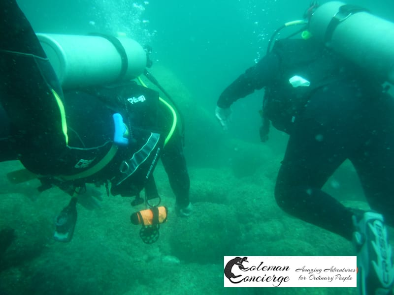 Dive of the Fledgelings- Our time with Dolphin Dive Center