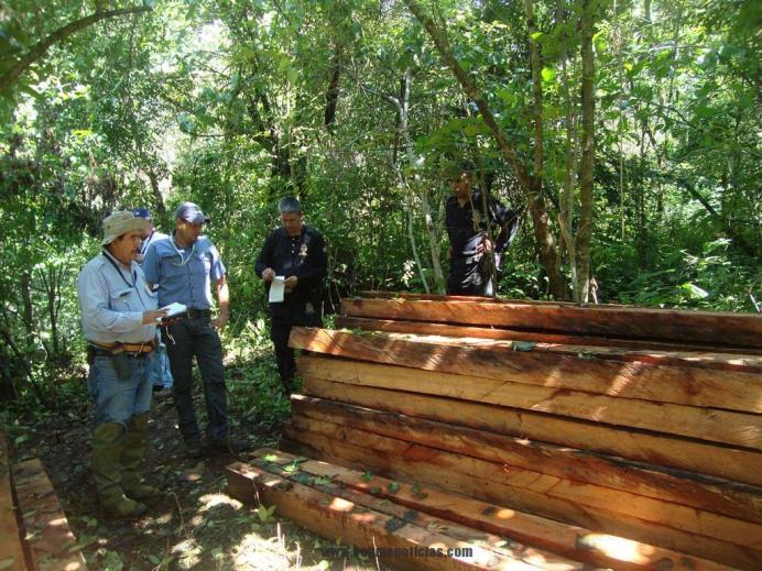 especies forestales en Minatitlán