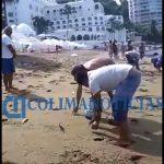Salen peces a la playa La Audiencia 3 150x150 - Salen peces a la playa La Audiencia