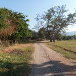 empleo temporal ixtlahuacan 150x150 - Con buenos resultados continúa el programa de empleo temporal en Ixtlahuacán