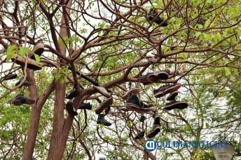 El árbol de los Tenis5