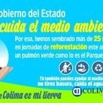 Colima noticias Reforestacion 300 x 150