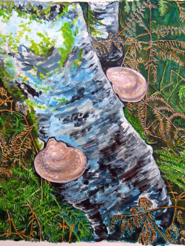 Silver Birch with beefsteak fungi