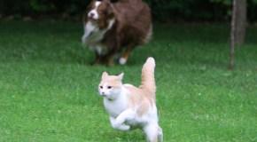 Herding Cats and Enterprise Social Planning