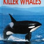 I Love Killer Whales
