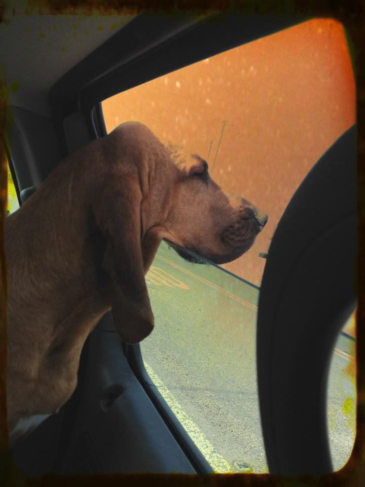 The Hot Car Epidemic: How to Appropriately Handle Dogs in Hot Cars