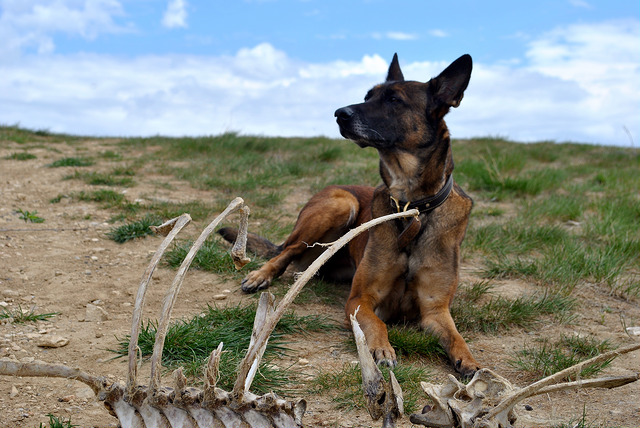 Experience Matters: Why I Don't Feed My Dogs a Raw Diet