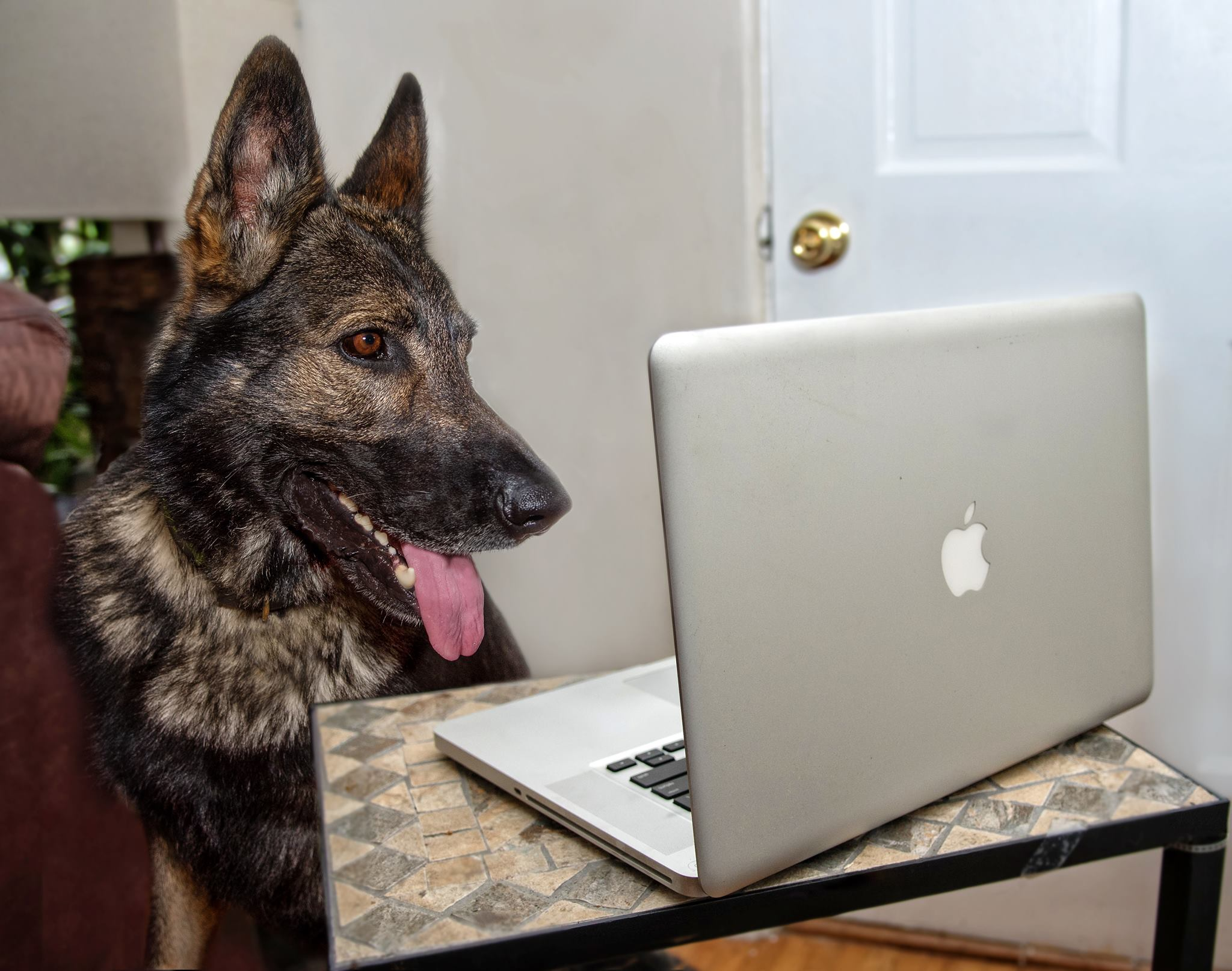 Going Digital: 3 Things You Need to Take Your Dog Training Business to the Next Level