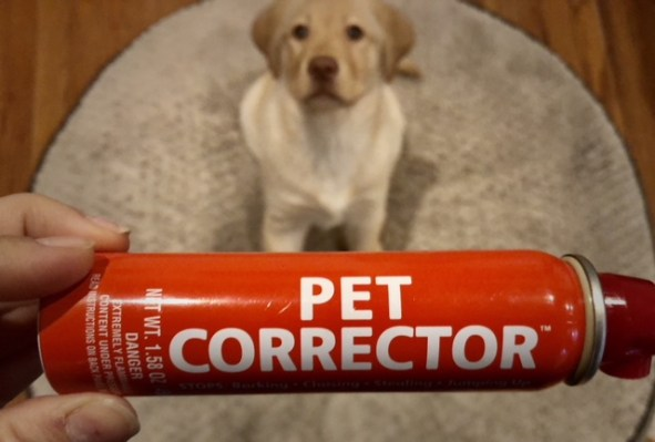 Hand holds up the Pet Corrector horizontally while yellow lab puppy stares into the camera in the background.