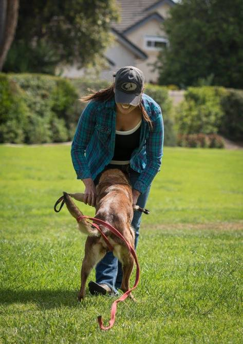 Dog trainer, Meagan Karnes plays tug with a Malinois outside as a drive building exercise.