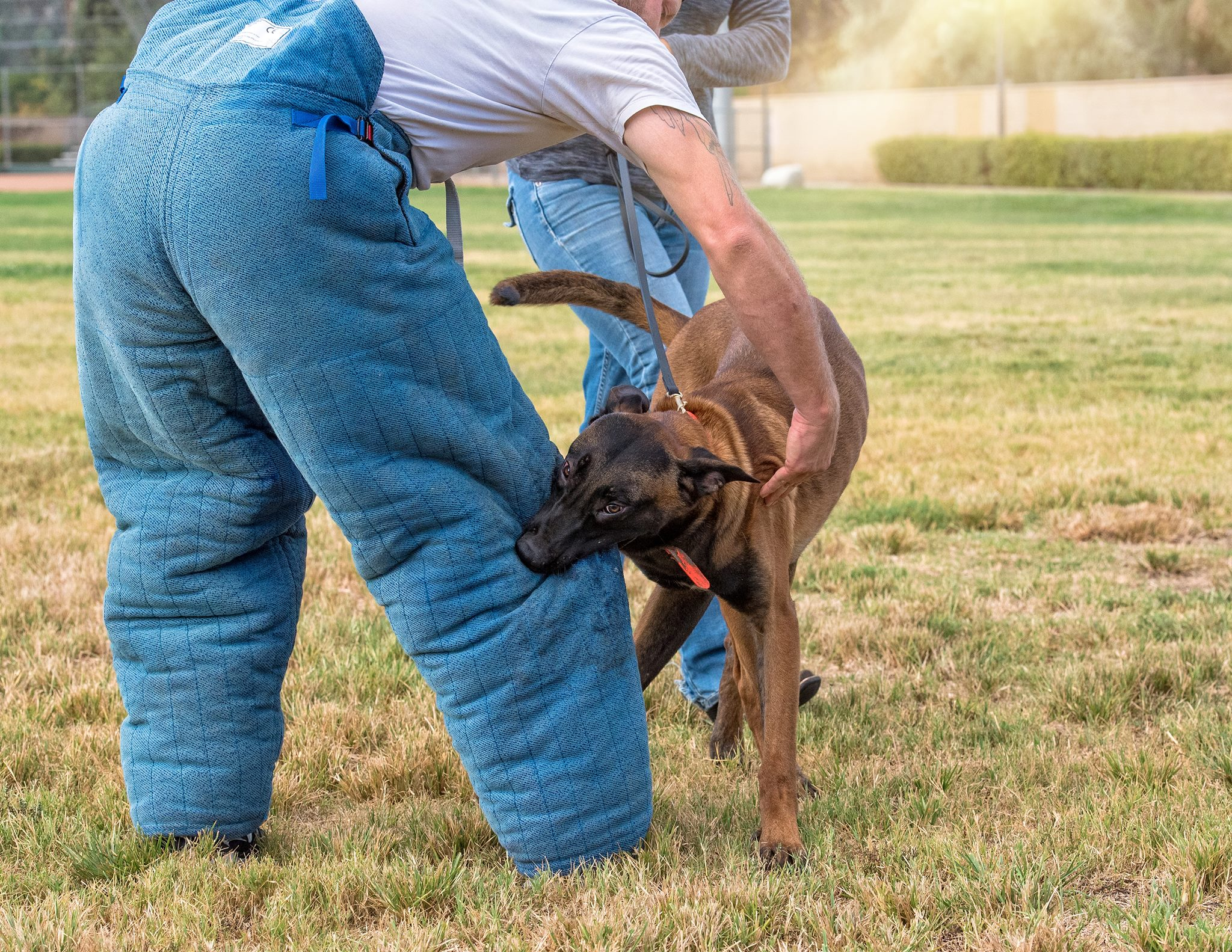 Missed Messages: Is Your Dog Feeling Secure in Bitework or Tug Play?