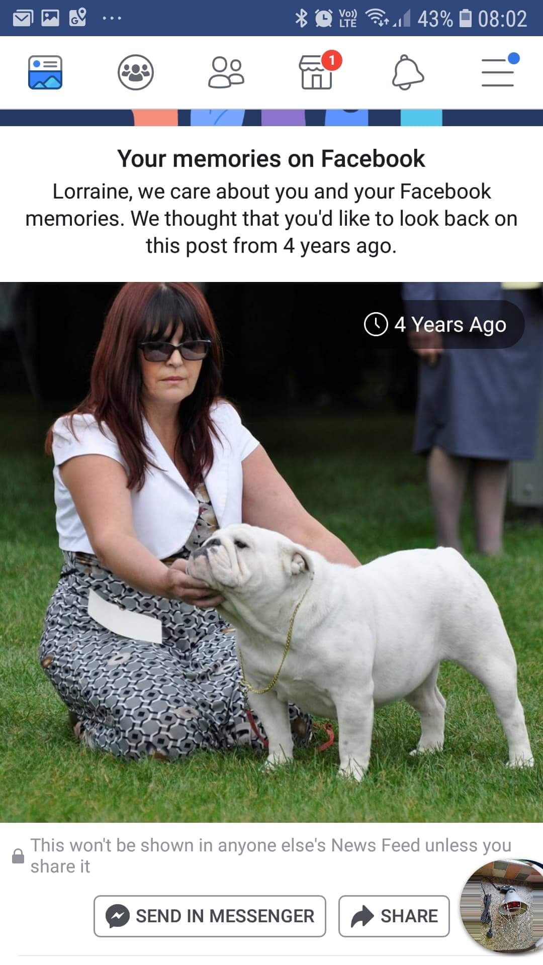 Collectibulldogs