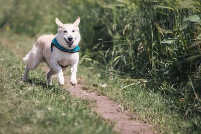 6 Ways CBD Can Increase Your Dog's Fitness