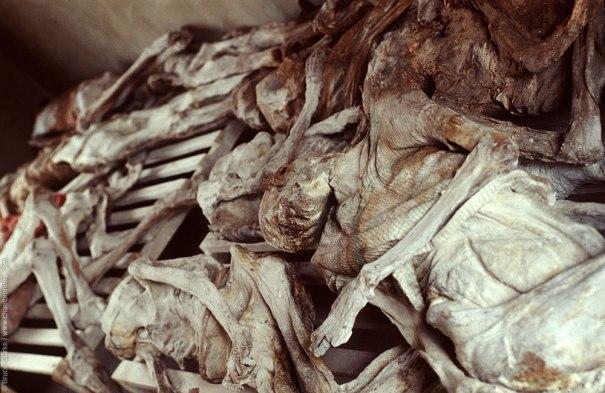Cadavres de Murambi