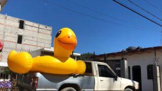 Duck in a Truck - Colleen Friesen
