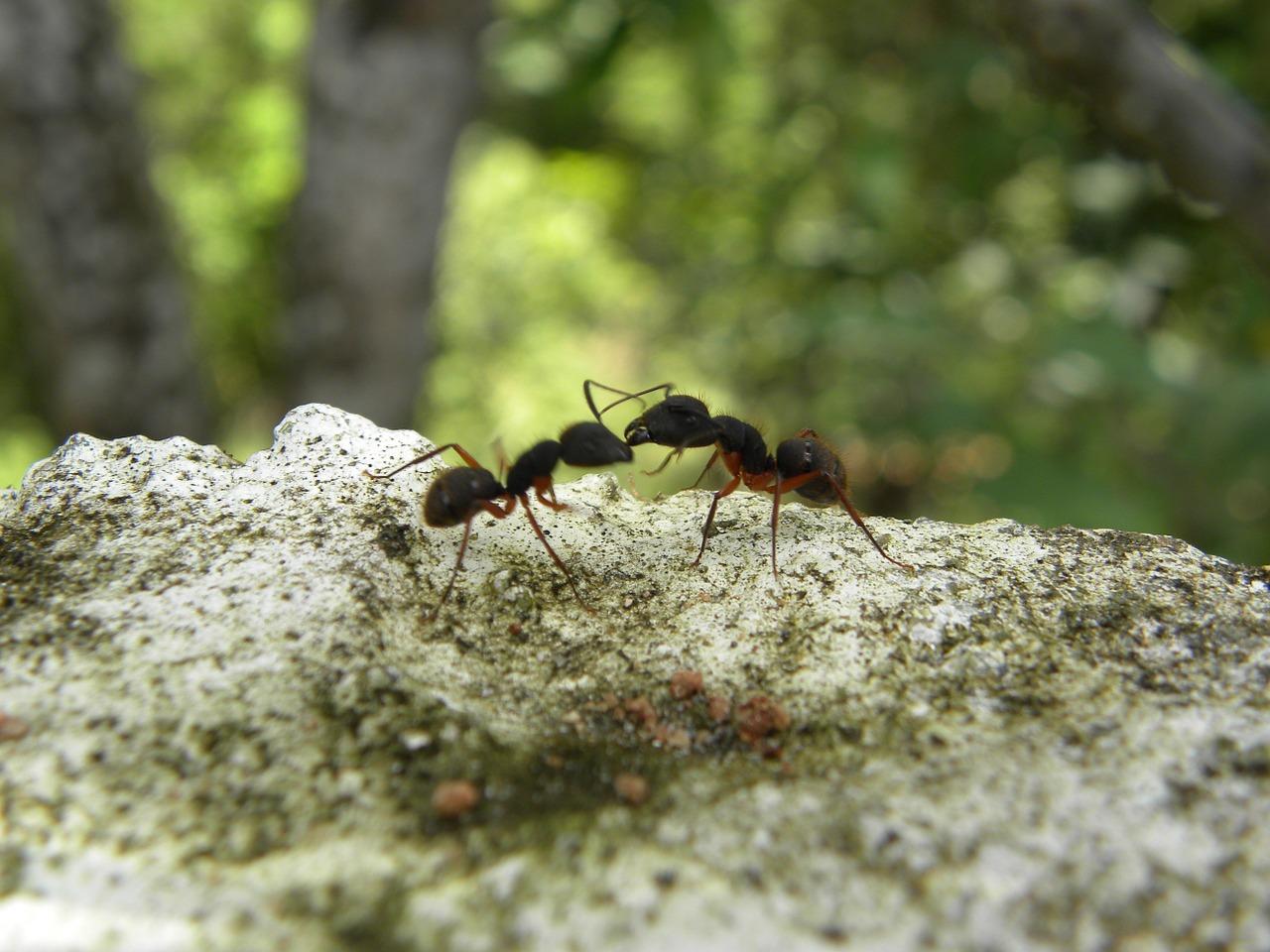ants-608597_1280
