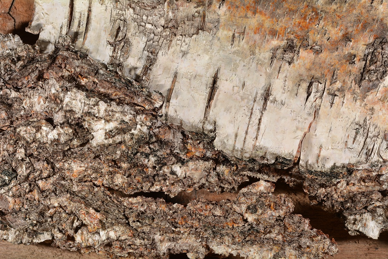 birch-bark-579667_1280