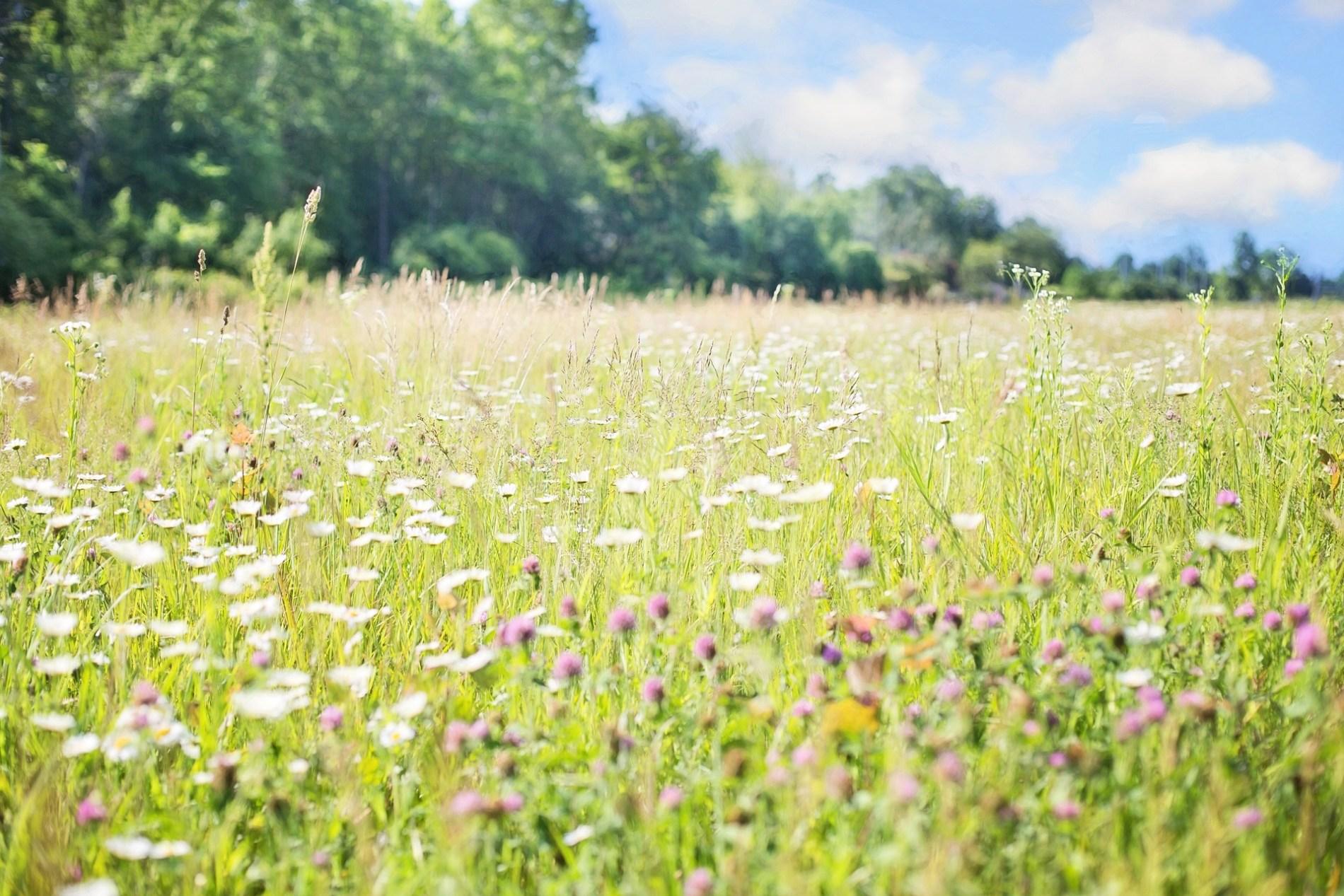 wildflowers-817181_1920