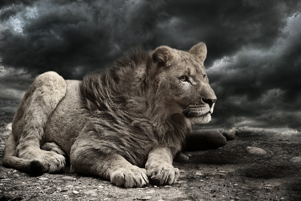 lion-610970_1280